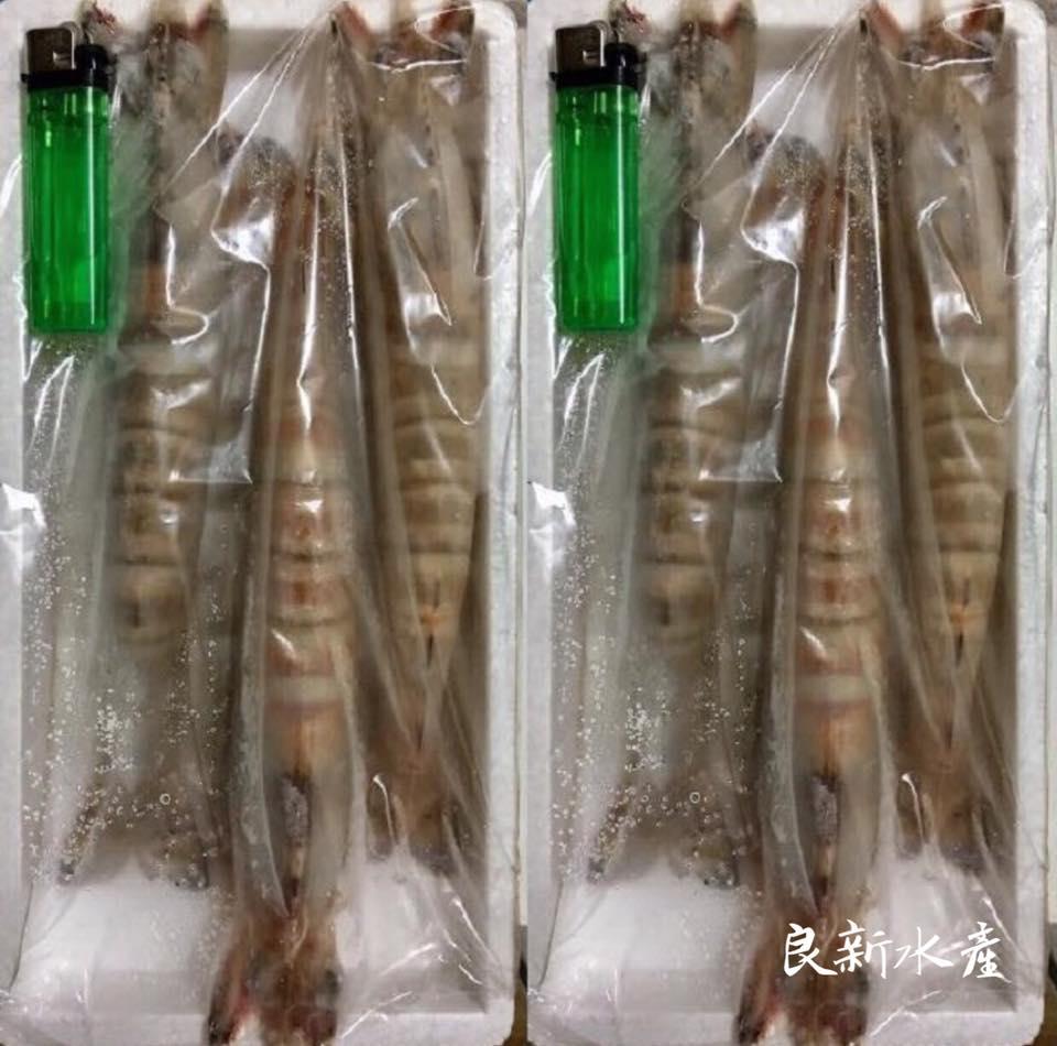 【良新水產】野生超大明蝦/斑節蝦(3尾裝)