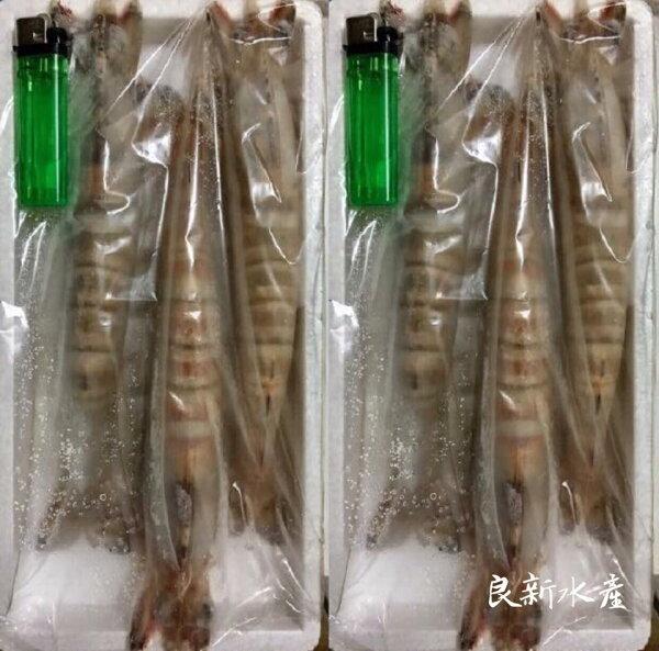 【良新水產】野生超大明蝦斑節蝦(3尾裝)