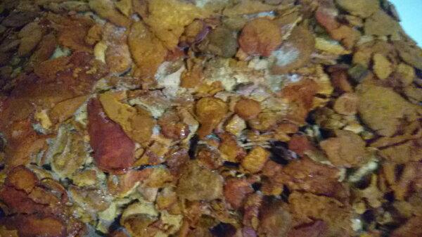 牛樟芝(中)牛樟菇子實體樟芝樟菇(每兩5500元)