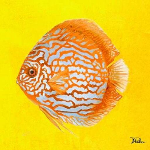 Bright Aquatic Life IV Poster Print by Patricia Pinto (12 x 12) 5e1f9fb87030b9a7726462be4e1f4701
