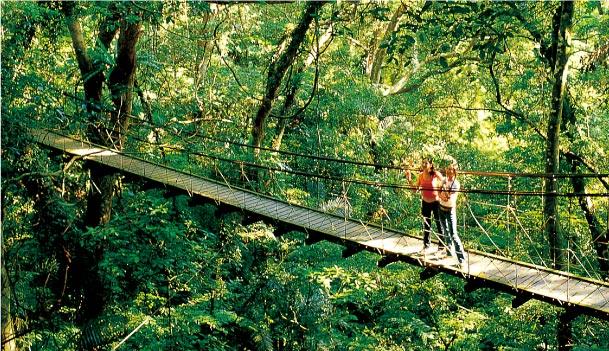 大板根森林溫泉渡假村單人入園門票