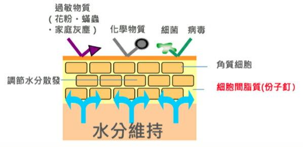 韓國 Dr.Jart+神奇分子釘保濕面膜(5pcs/盒)黃色 嘟可小舖