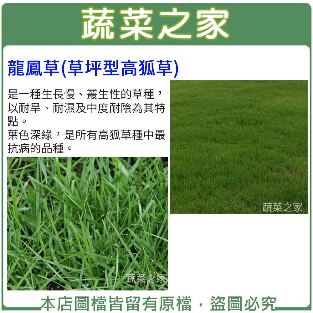 【蔬菜之家00M13-1】大包裝M13龍鳳草種子350克(草坪型高狐草)