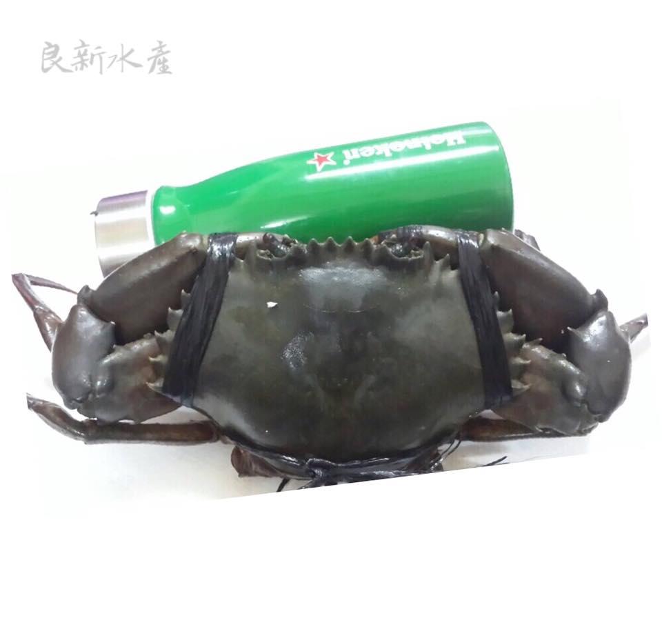 【良新水產】免運費-活體先先螃蟹(規格300~600g) 菲律賓沙公母、台灣紅蟳、處女蟳