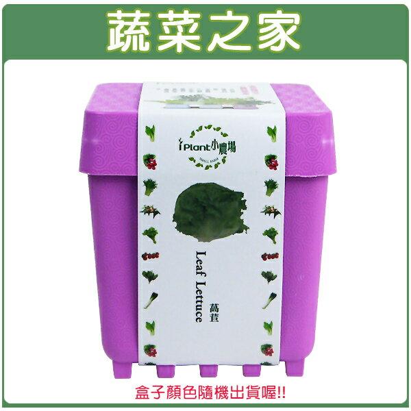 【蔬菜之家004-D15】iPlant小農場系列-萵苣