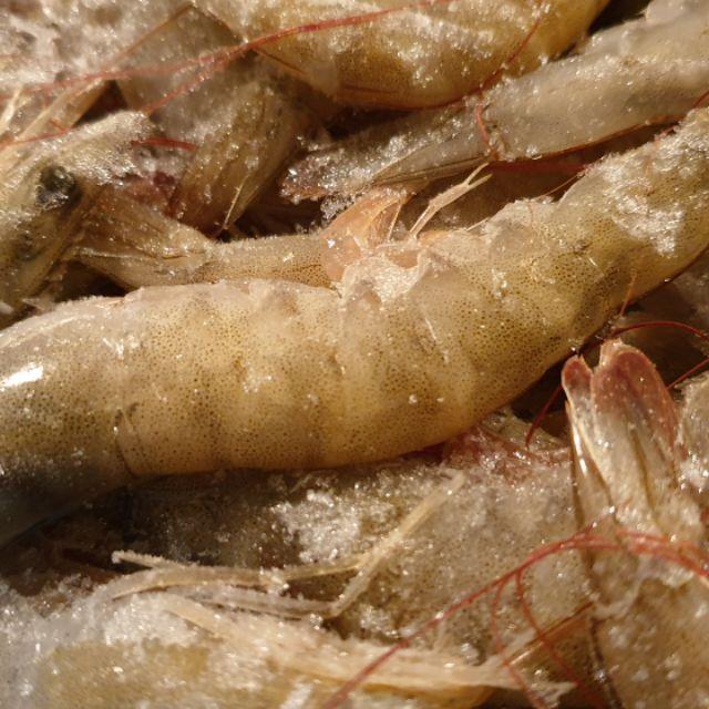 白蝦/900g/蝦/宏都拉斯(張家海陸網)