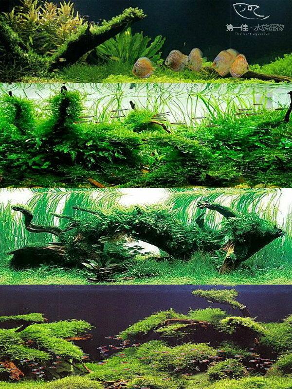 [第一佳 水族寵物] 專業海水缸 大型缸 大型壓克力缸 海鮮餐廳魚缸 招財風水缸 水草造景服務 岩板 流沙 瀑布