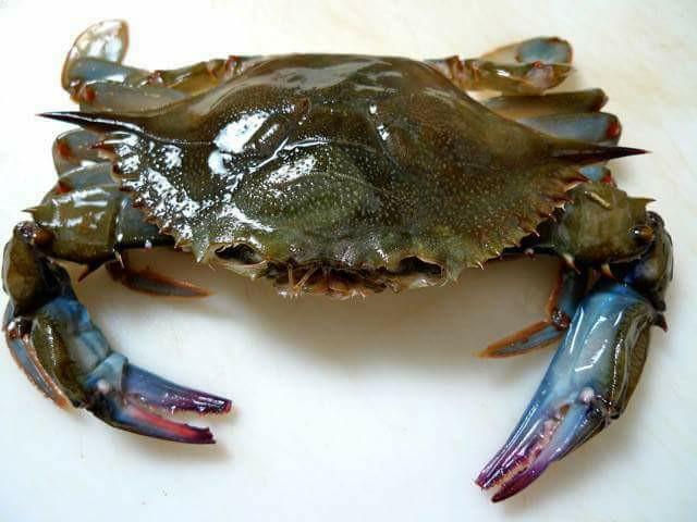 【台南祥發興水產批發】 10隻/600g/盒 鮮甜軟殼蟹 #軟殼蟹 #螃蟹