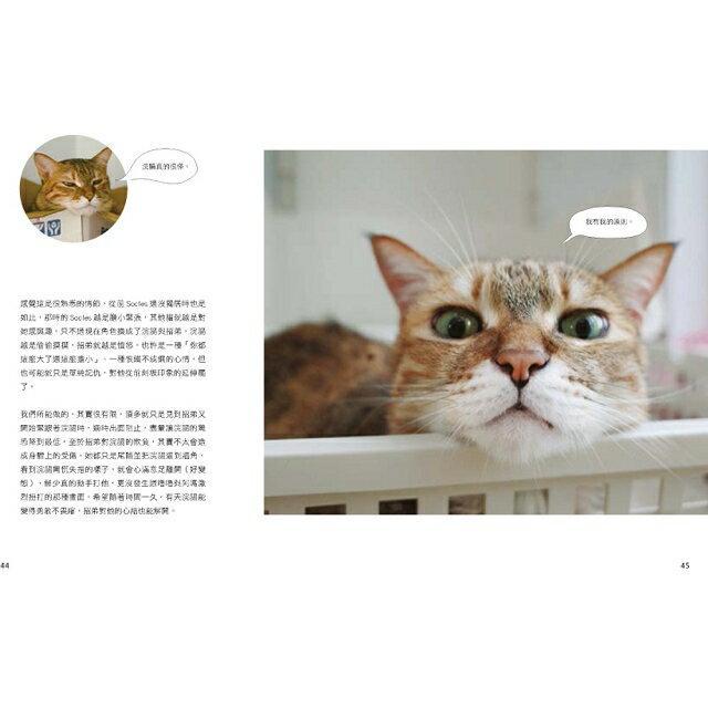 黃阿瑪的後宮生活:貓永遠是對的 5