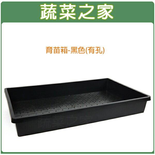 【蔬菜之家005-C86-BL】育苗箱(有孔)-黑色(育苗盤.芽菜箱.可當四方型栽培盆端盤)