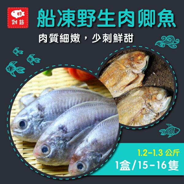 【雞籠好魚】船凍野生肉卿魚*1盒組(1盒15-16條裝)★肉質滑口細緻無小刺,老少都適合★