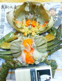【良新水產】活體菲律賓沙母(每隻重400-500g)