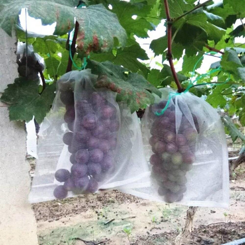 防鳥網 100個尼龍網袋火龍果/火龍果套袋/專用套果袋/水果防鳥 寶貝計畫