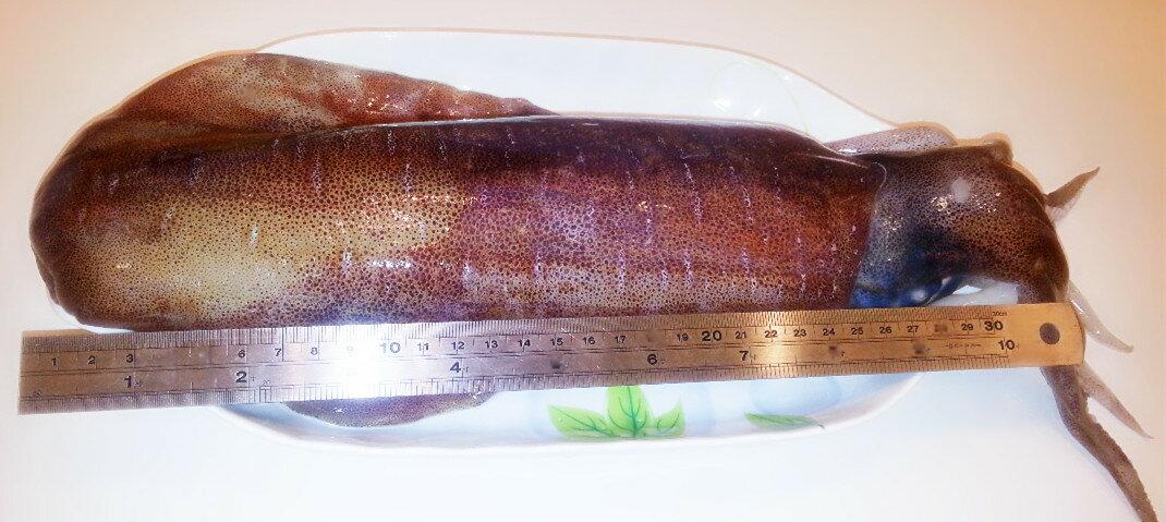 【雞籠好魚】免運!!【萬事興昌3件組】: 3種高級海鮮年菜組(大白鯧/巨無霸軟絲/中明蝦或海熊蝦) 4
