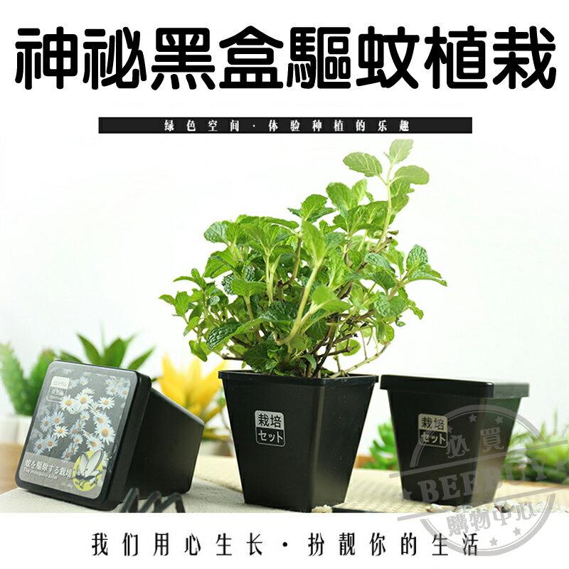DIY有機種植 防蚊植栽 三種 小雛菊 薰衣草 薄荷 植物 家庭 造景 裝飾物  小品植栽