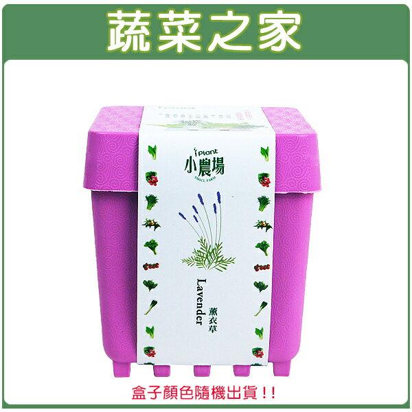 【蔬菜之家004-D11】iPlant小農場系列-薰衣草