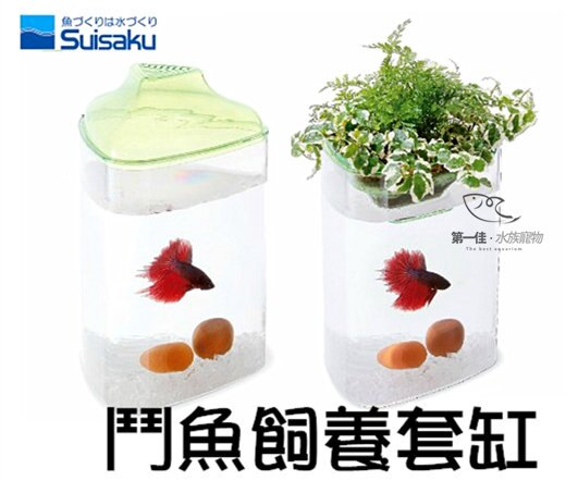 [第一佳 水族寵物] 日本水作SUISAKU [三角鬥魚飼養套缸] (含種植土+一體成型魚缸+上蓋)