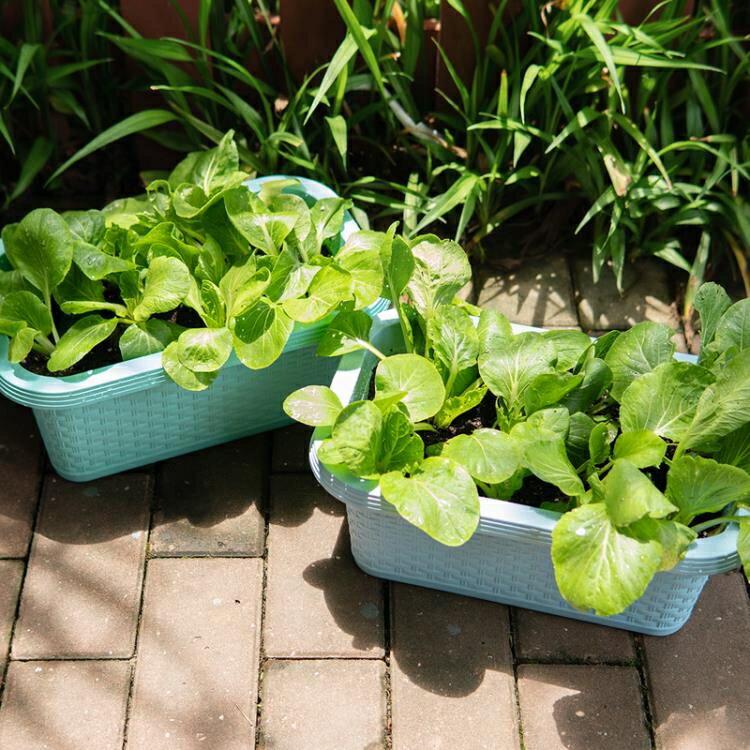 種菜盆 綠蘿花盆長方形塑料壁掛種植蔬菜多肉盆栽陽臺種菜盆自動吸水花盤