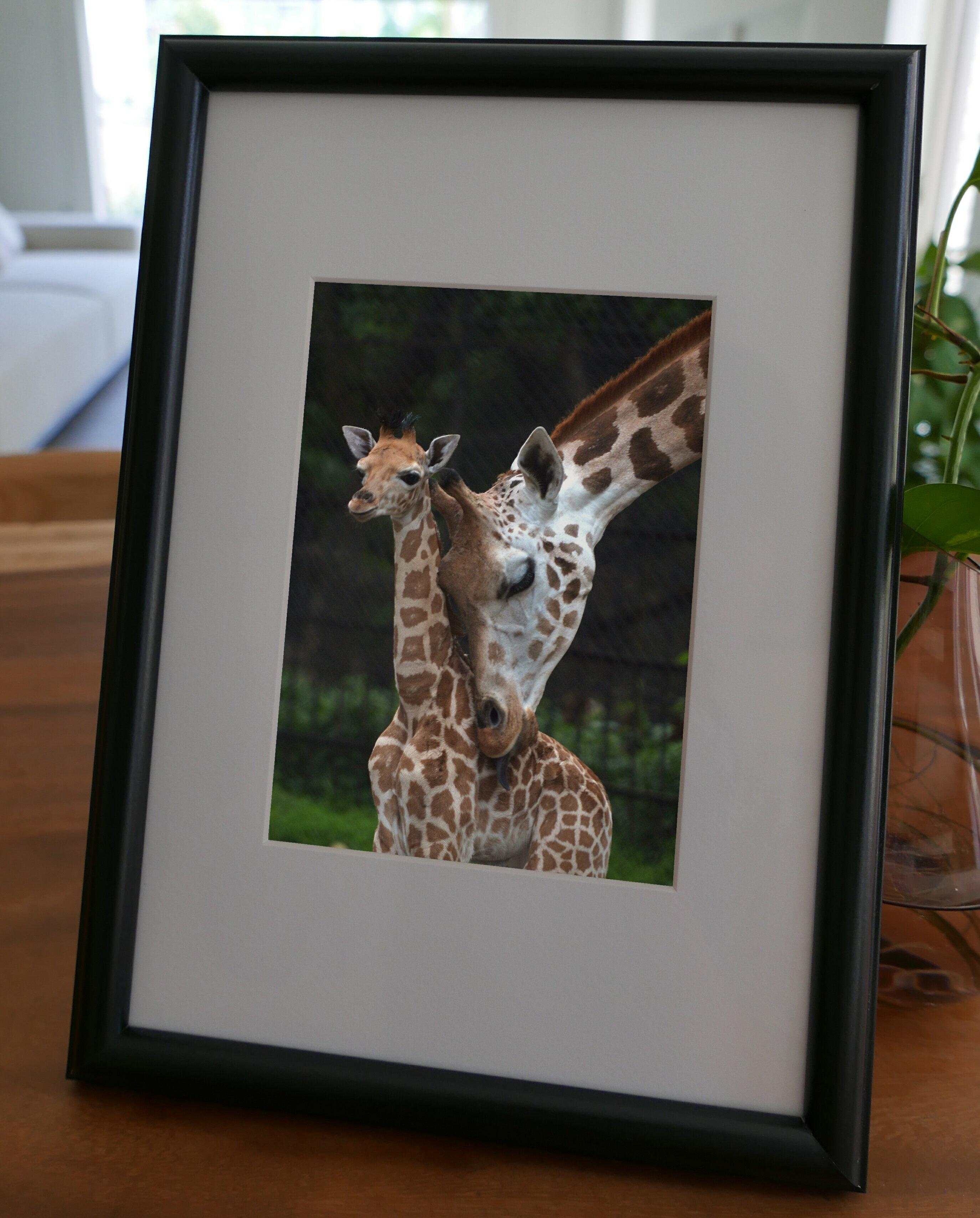 聚鯨Cetacea﹡Art【KLFZ-0919】family love親情/animal動物/warm溫馨 畫框相框