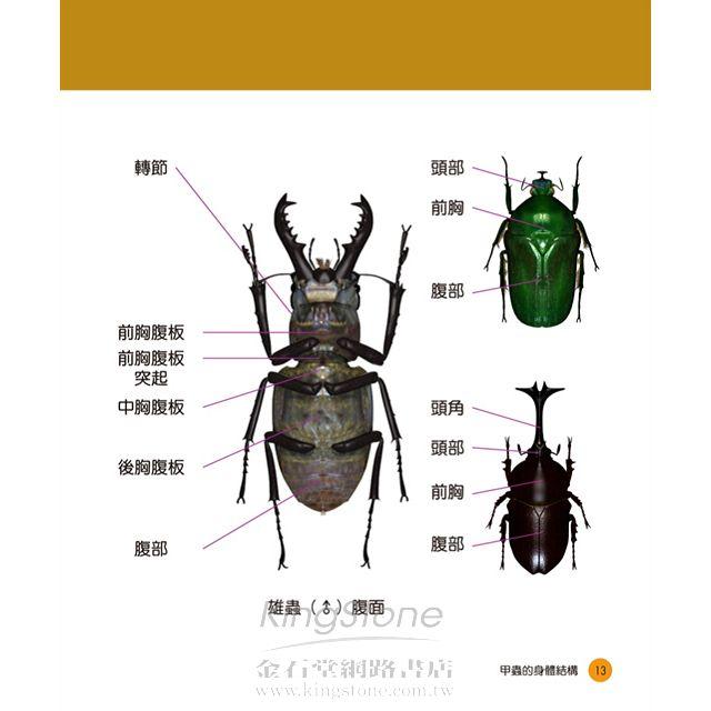 甲蟲王者:50隻最強、最美的台灣獨角仙、鍬形蟲圖鑑 6