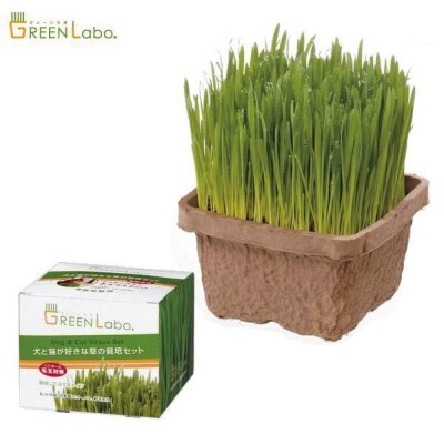 《滿千加購》日本 Green Labo DIY 進口貓草(燕麥草)