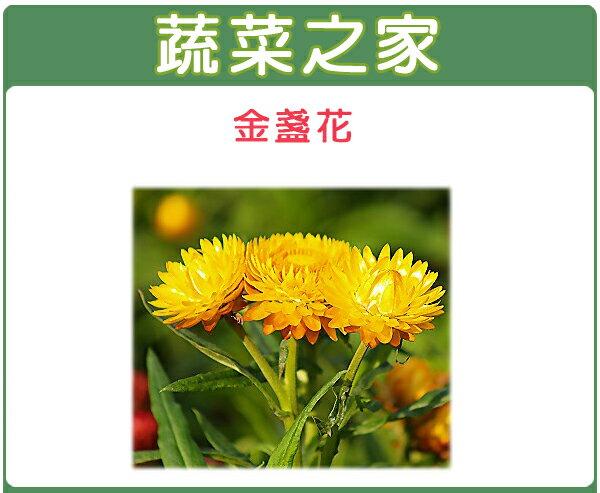 【蔬菜之家】H19.金盞花(黃色,高20~30cm)種子30顆