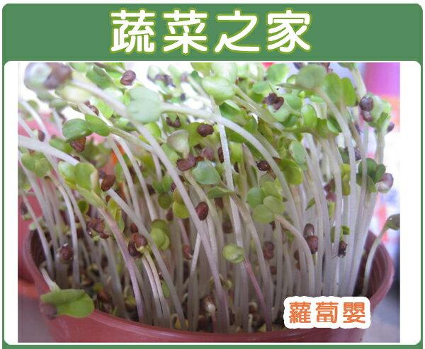 【蔬菜之家】大包裝J02.蘿蔔嬰300克(約21000顆)(蘿蔔芽菜種子)