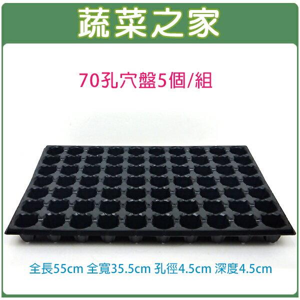 【蔬菜之家005-C32】70孔穴盤5個/組