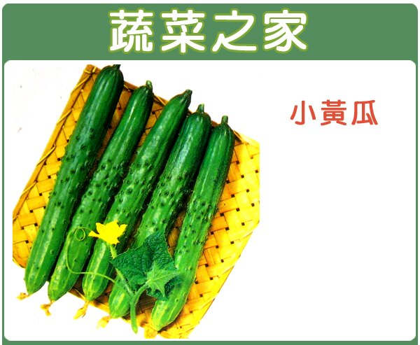 【蔬菜之家】G11.小黃瓜種子30顆
