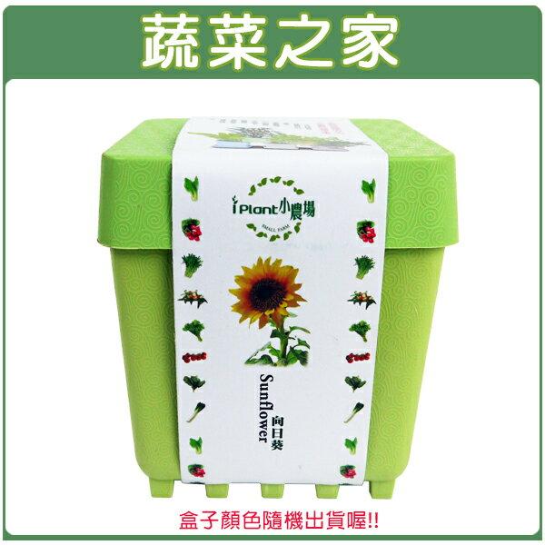 【蔬菜之家004-D16】iPlant小農場系列-向日葵