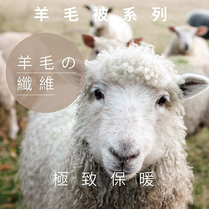 【Victoria】紐西蘭雙人羊毛被2.6公斤_TRP多利寶