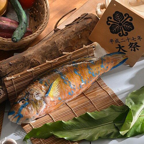 特選野生鸚哥魚 (550g/尾)【大宇水產 】肉質無與倫比的Q 彈扎實健康不油膩 適合蒸、煮料理