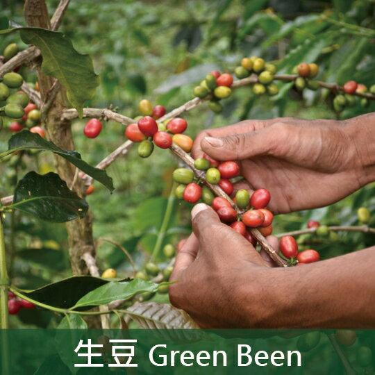 《未烘焙生豆》印尼蘇門答臘亞齊鑽石村曼特寧G1