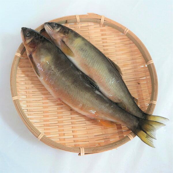 【璽富水產】台灣帶卵母香魚1kg盒(約5~7尾)