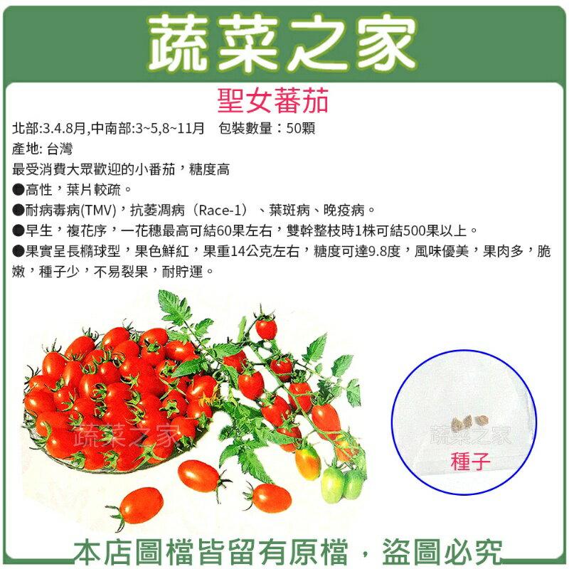 ~蔬菜之家00G86~大包裝G86.聖女蕃茄種子50顆  栽培聖女品種.農友種苗 .非自採