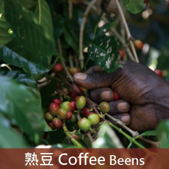 衣索比亞日曬耶加雪菲G1沃卡合作社單一小農孟格夏批次