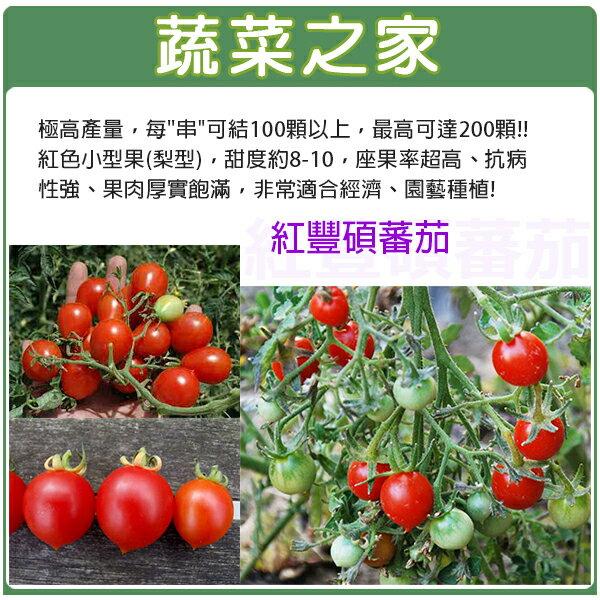 【蔬菜之家】G23.紅豐碩蕃茄種子3顆
