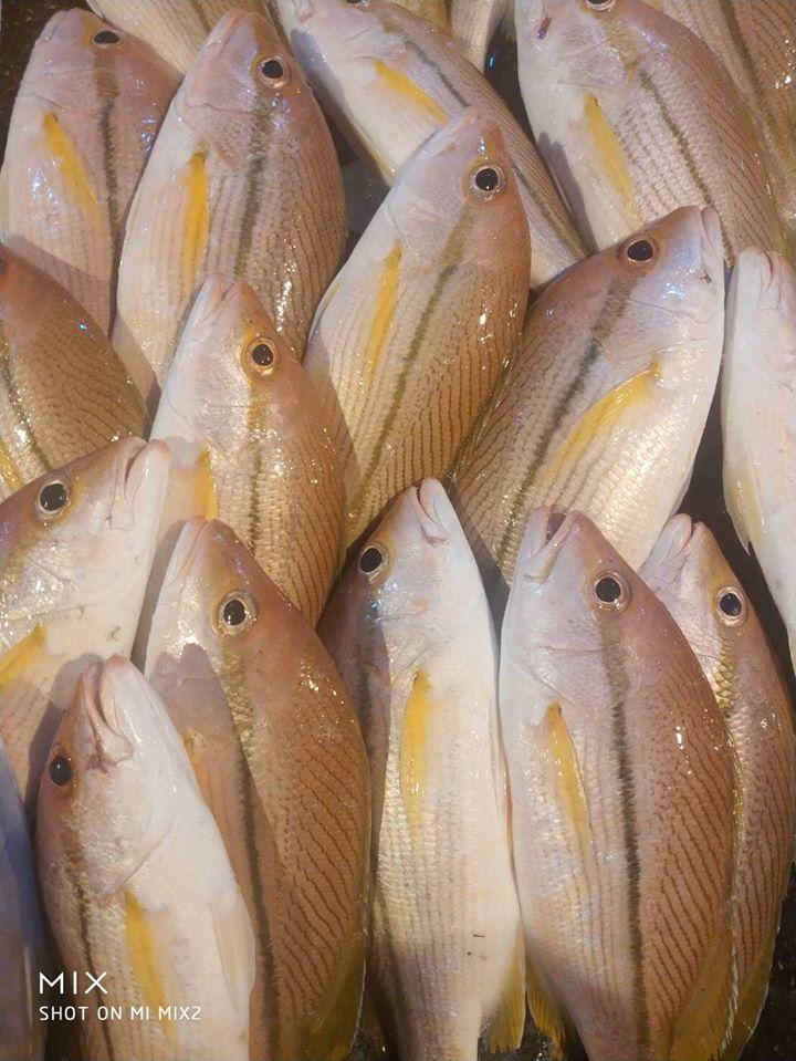 澎湖野生赤筆魚(300g) 海鮮 水產 鮮魚 冷凍