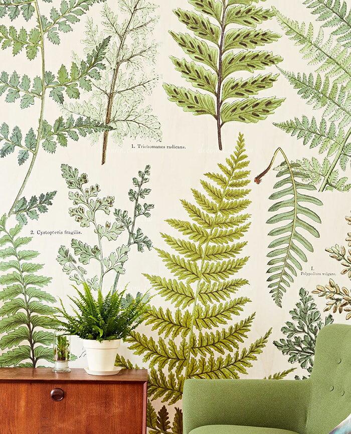 F115-366104~106 荷蘭期貨壁紙 大圖影像 自然植物圖鑑 復古 航海風