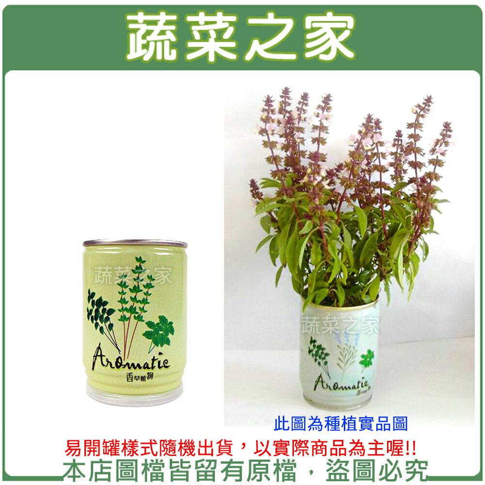 【蔬菜之家004-E06】iPlant易開罐花卉-九層塔