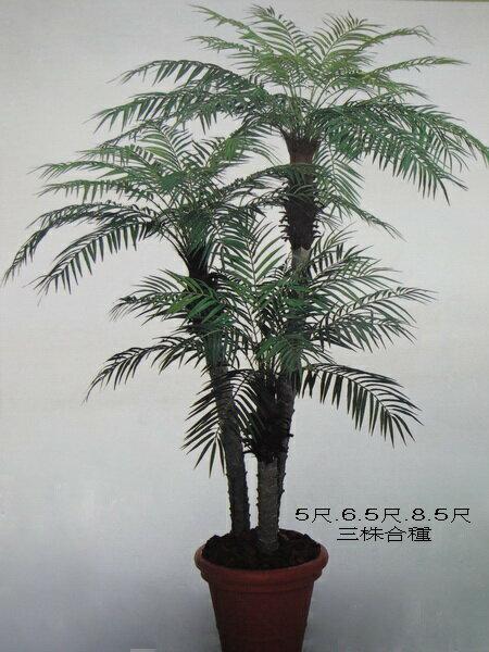 ★超低價★羅比親王海棗 / 塑膠樹幹人造樹 空間 景觀 佈置 造景