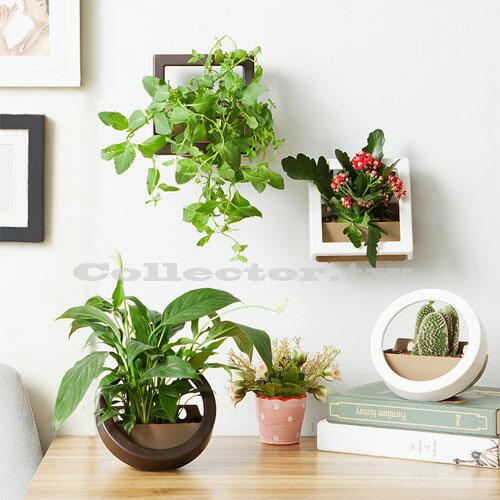 【F17033102】日式居家桌牆兩用微景觀多肉植物生態DIY盆栽 迷你植物盆景 創意花盆