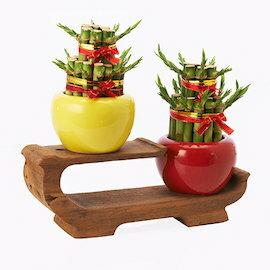 辦公室開運小物~雙層開運竹~彩色盆栽(紅色盆)