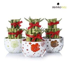新上市~時尚風~雙層開運竹精緻小盆栽