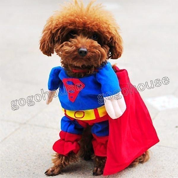 ☆狗狗之家☆日本peppets狗狗超人變身裝~附披風