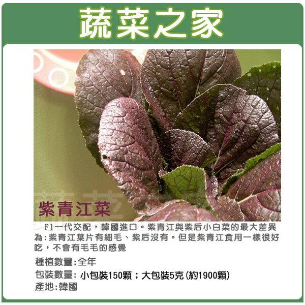 【蔬菜之家】紫色青江菜種子(韓國進口)