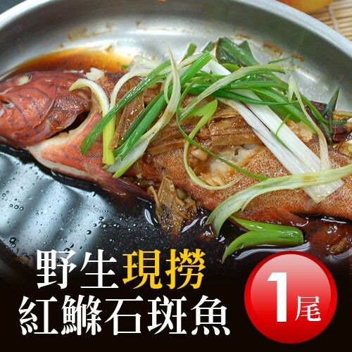 【築地一番鮮】峇里島野生紅鰷魚(350g±50g/尾)-任選