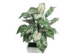 ★超低價★2.2尺 綠彩葉芋/ 人造花 空間 景觀 佈置 造景
