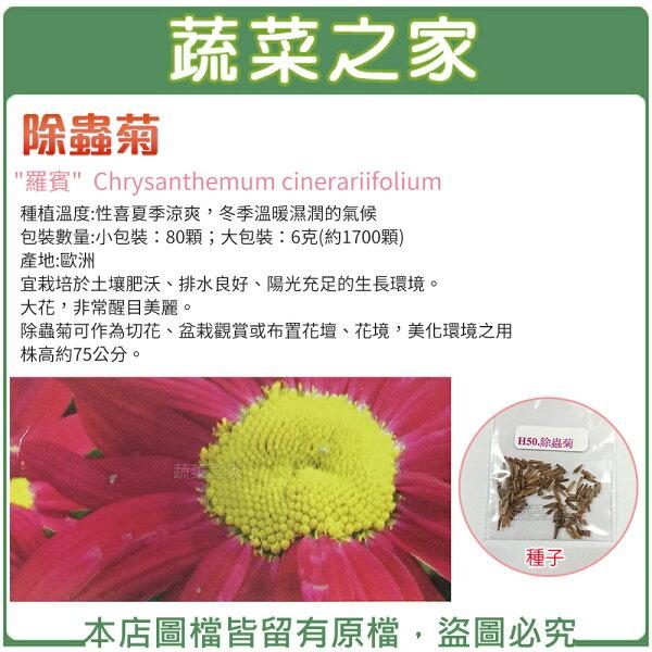 【蔬菜之家】除蟲菊種子(共2種規格可選)