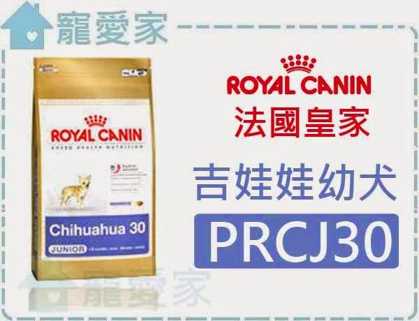 ☆寵愛家☆法國皇家 PRCJ30吉娃娃幼犬1.5公斤.